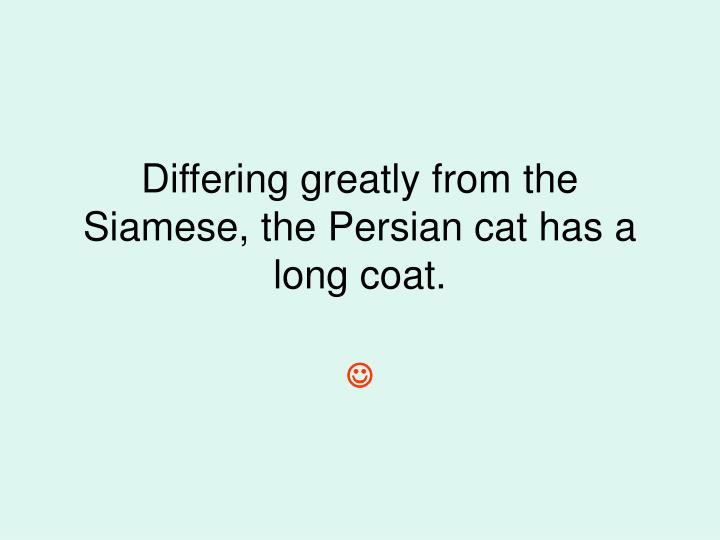Differing greatly from the Siamese, the Persian cat has a long coat.