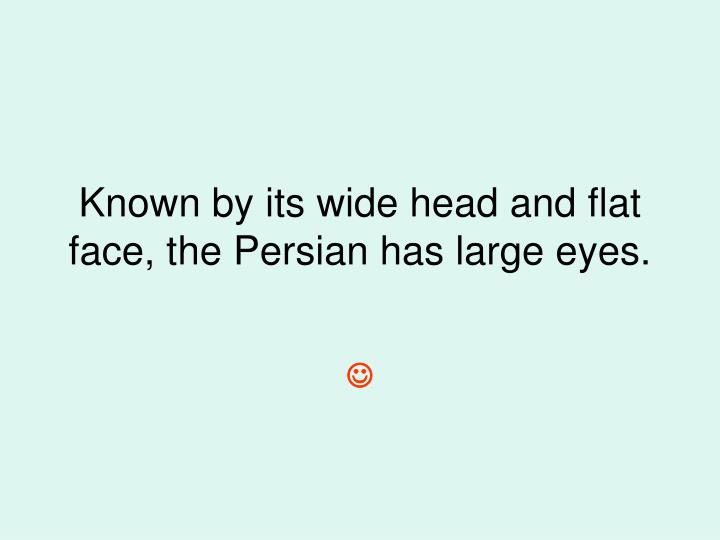 Known by its wide head and flat face, the Persian has large eyes.