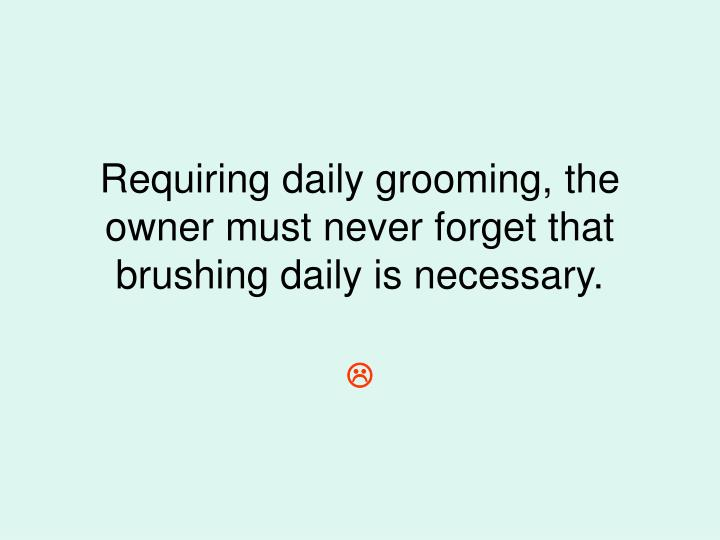 Requiring daily grooming, the owner must never forget that brushing daily is necessary.