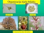 organizacija tijela biljaka