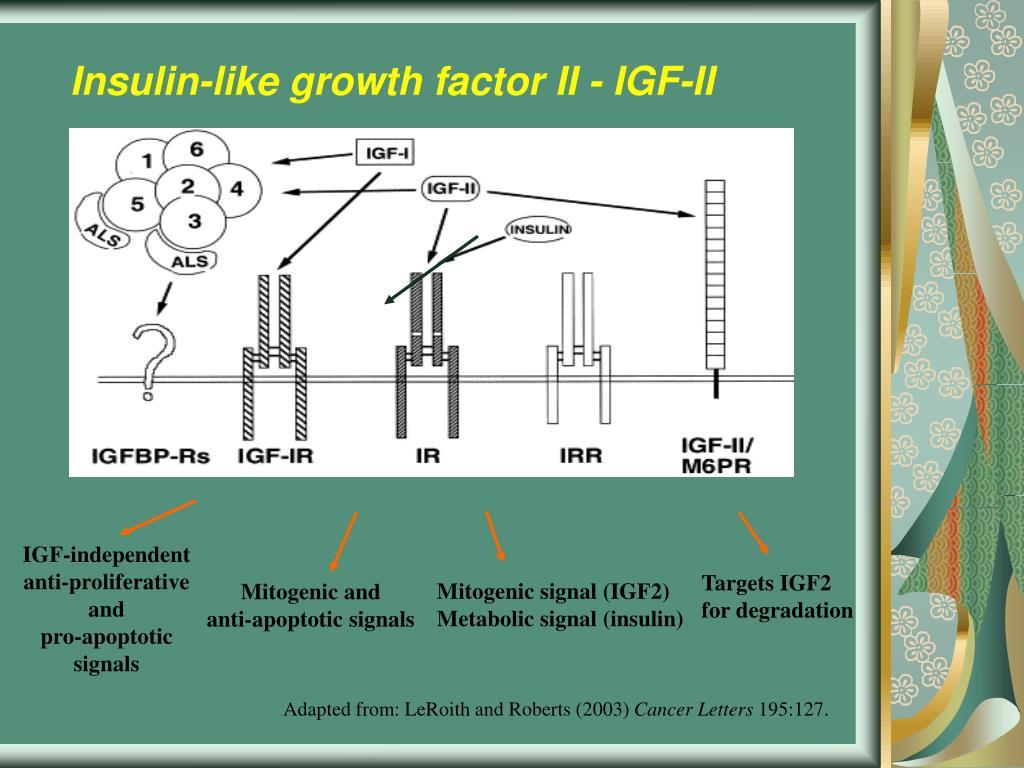 Insulin-like growth factor II - IGF-II