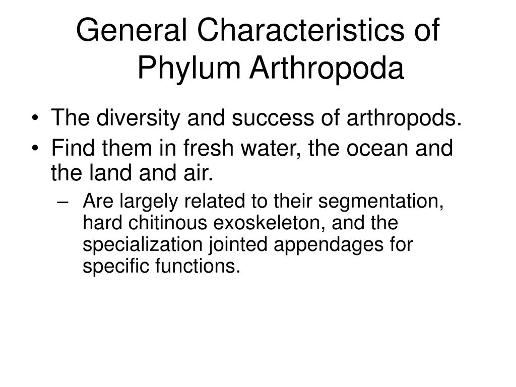 General Characteristics of Phylum Arthropoda