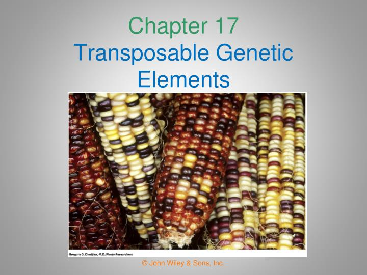 chapter 17 transposable genetic elements n.