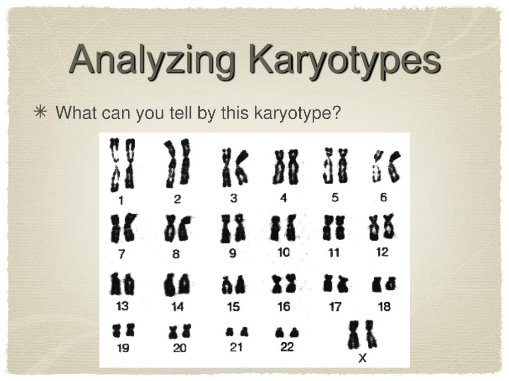Analyzing Karyotypes