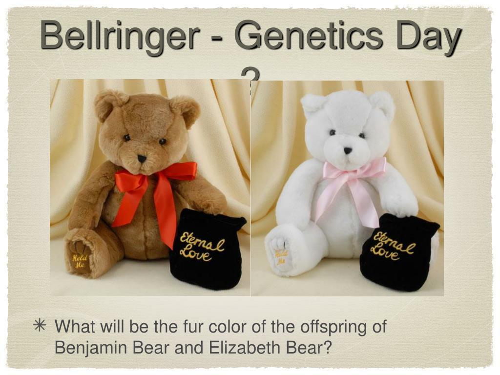 Bellringer - Genetics Day 2