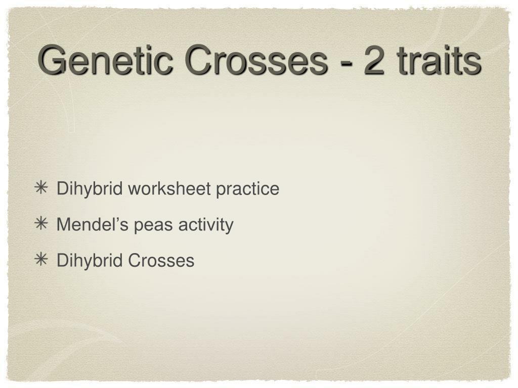 Genetic Crosses - 2 traits