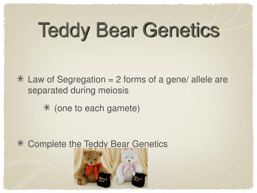 Teddy Bear Genetics