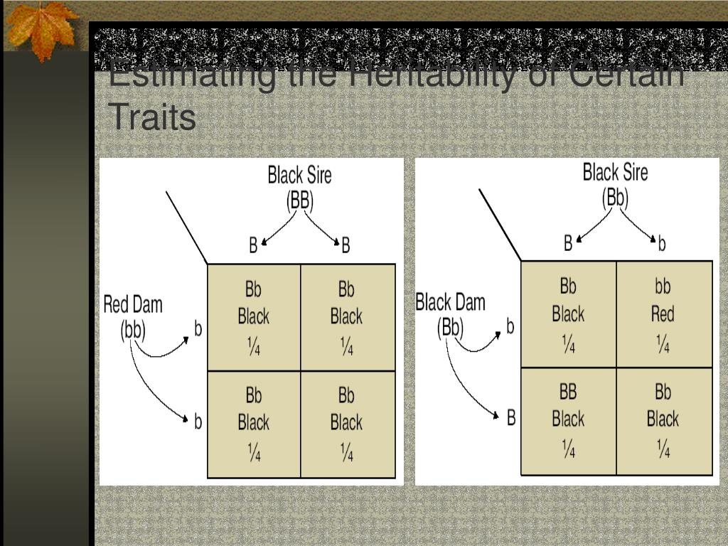 Estimating the Heritability of Certain Traits