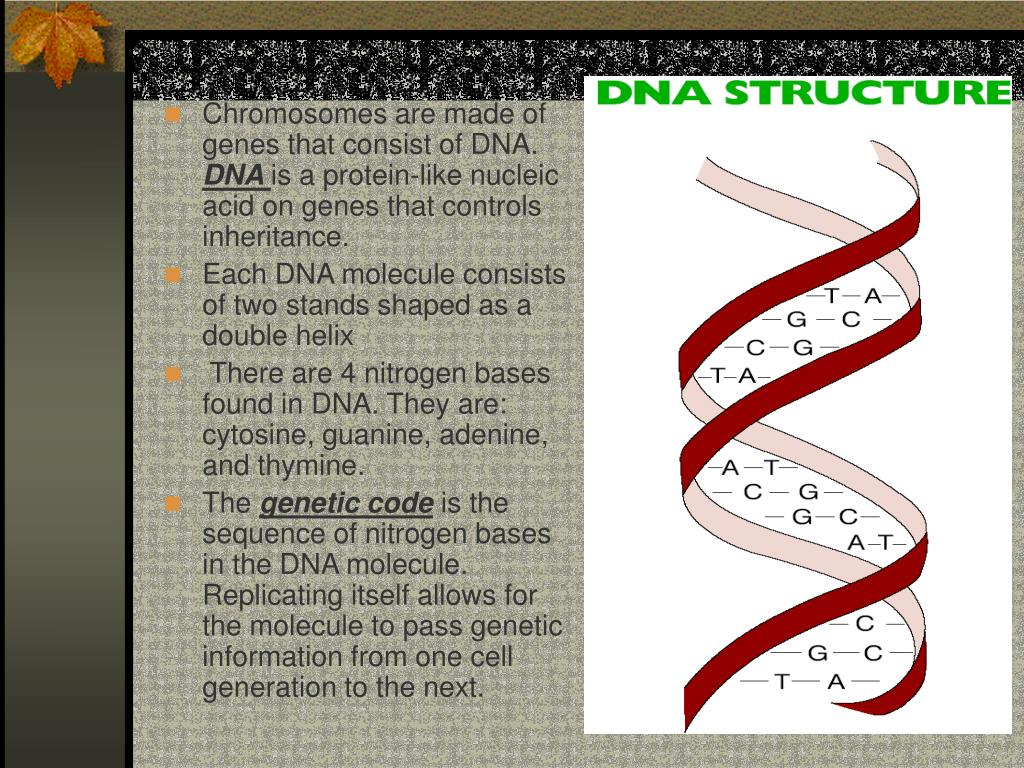 Chromosomes are made of genes that consist of DNA.