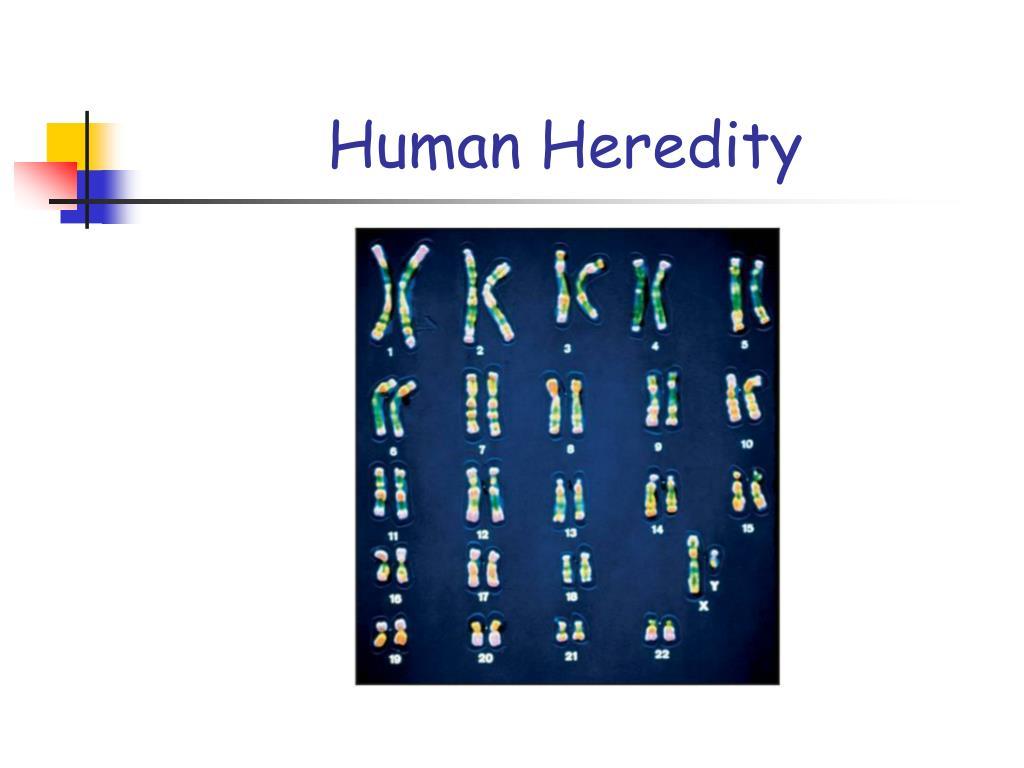 Human Heredity