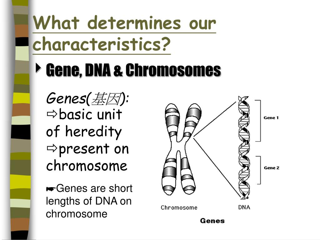 What determines our characteristics?