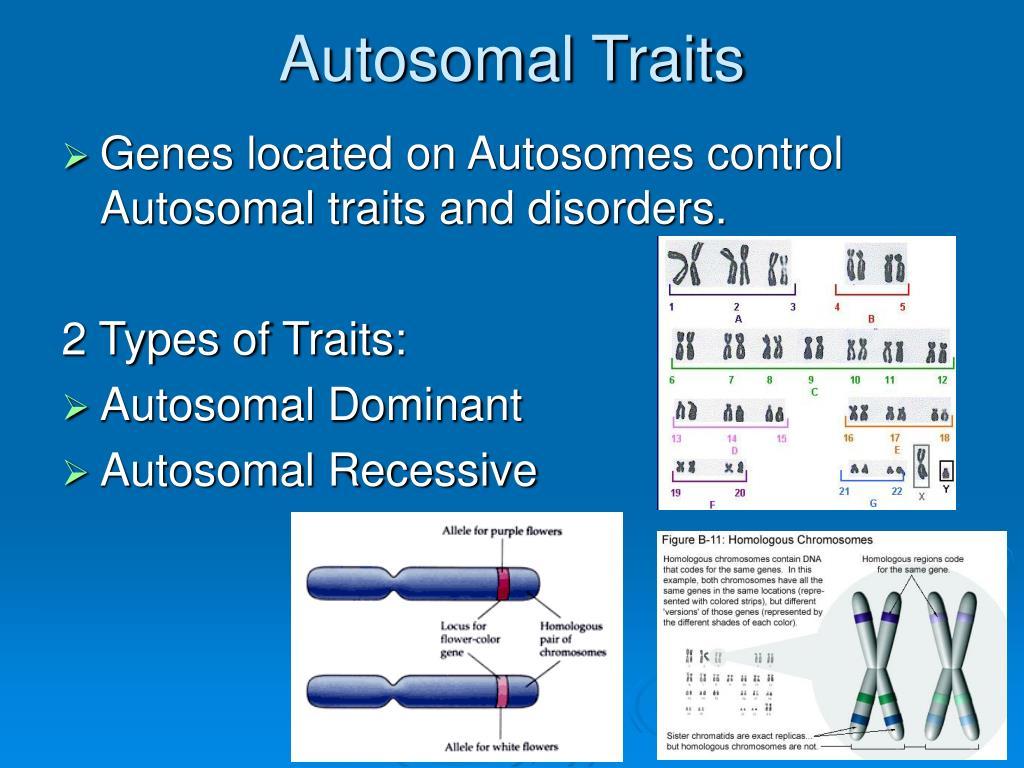 autosomal x-chromosome sex linked traits in Staffordshire