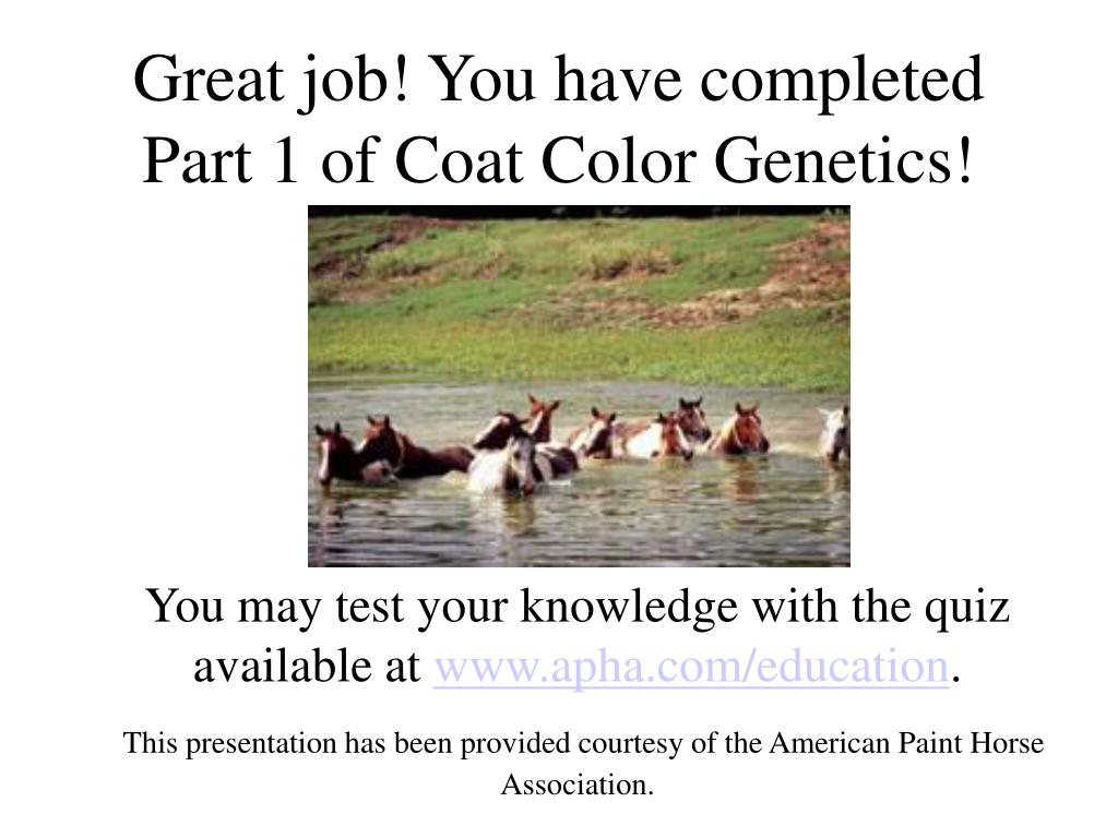 Great job! You have completed Part 1 of Coat Color Genetics!