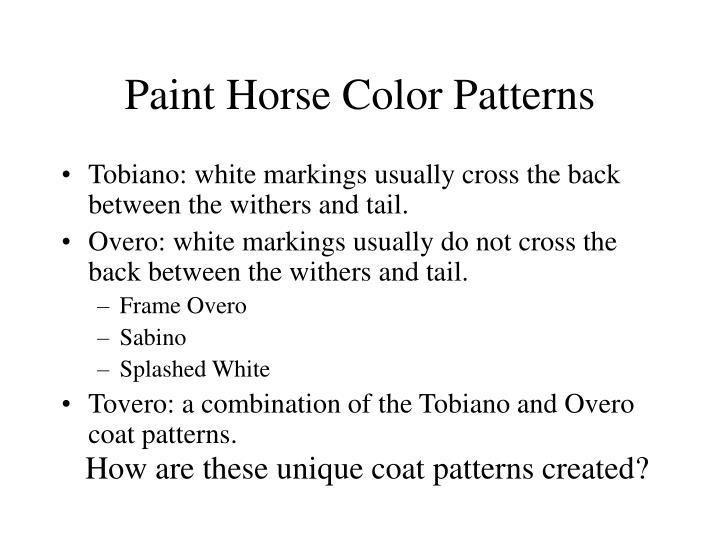 Paint horse color patterns