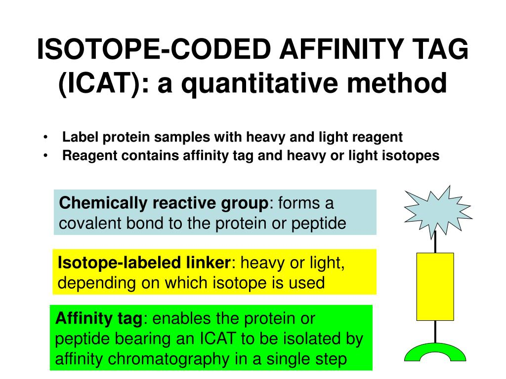 ISOTOPE-CODED AFFINITY TAG (ICAT): a quantitative method