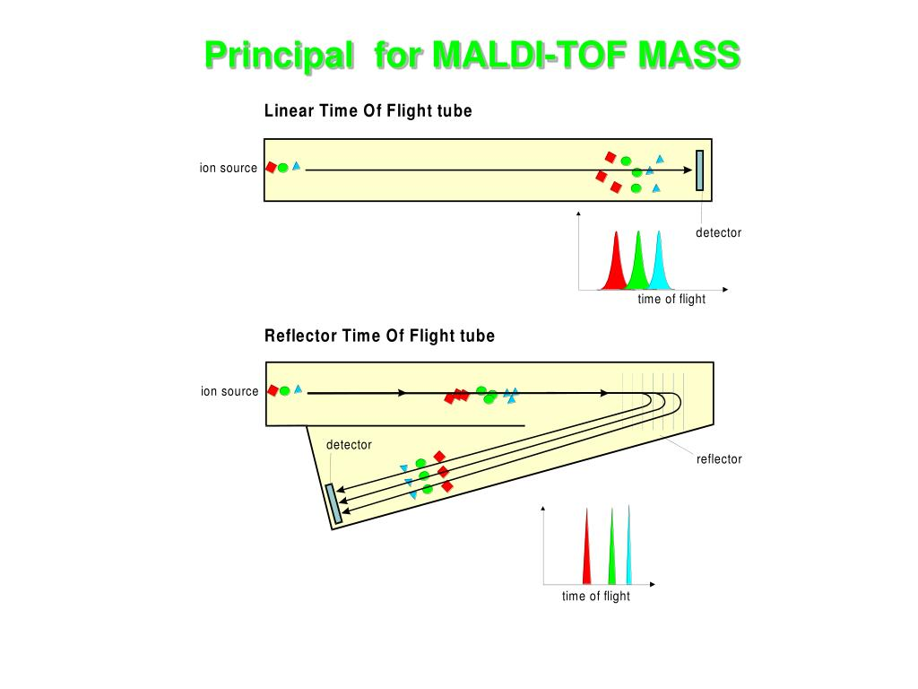 Principal  for MALDI-TOF MASS