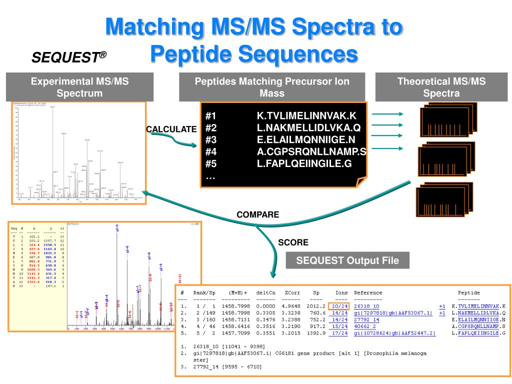 Matching MS/MS Spectra to