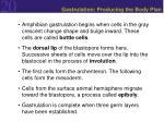 gastrulation producing the body plan3
