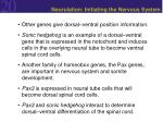 neurulation initiating the nervous system6