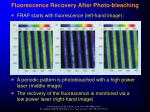 fluorescence recovery after photo bleaching1