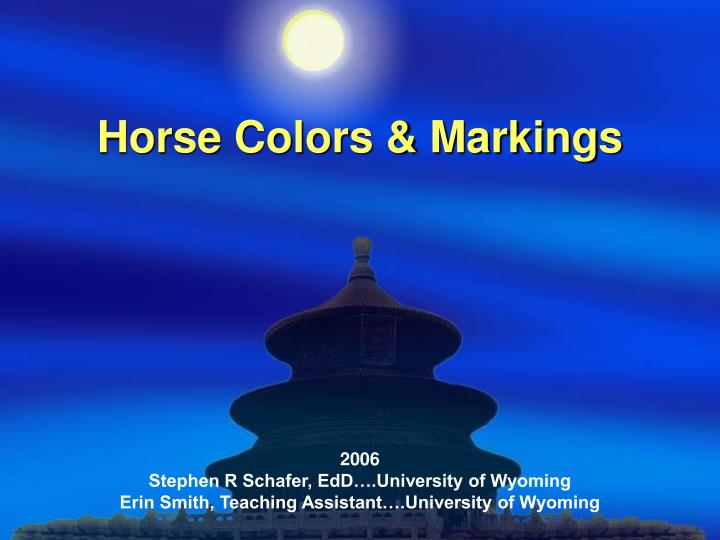 horse colors markings n.
