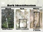 bark identification
