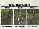 tree characters