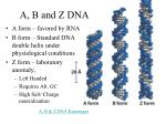a b and z dna