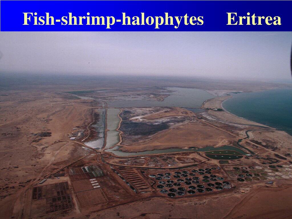 Fish-shrimp-halophytes     Eritrea