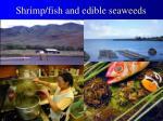 shrimp fish and edible seaweeds
