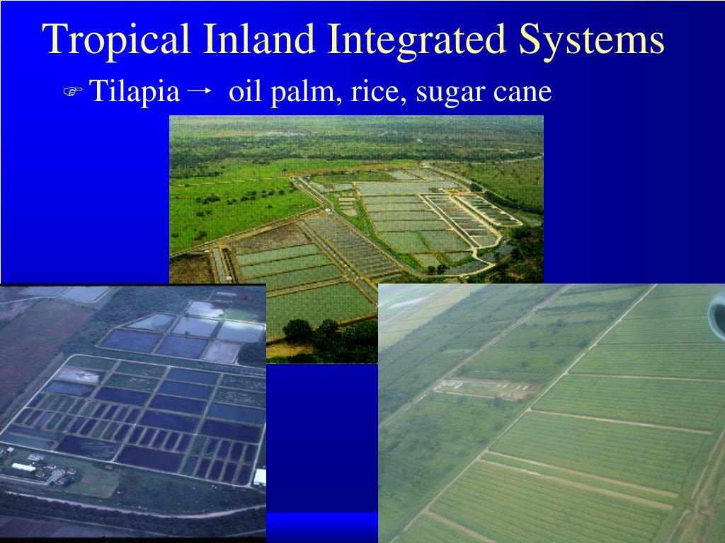 Tropical Inland Integrated Systems