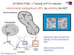 g170r f152i activity of p11l induced mitochondrial mistargeting to 90 by unfolding the agt1