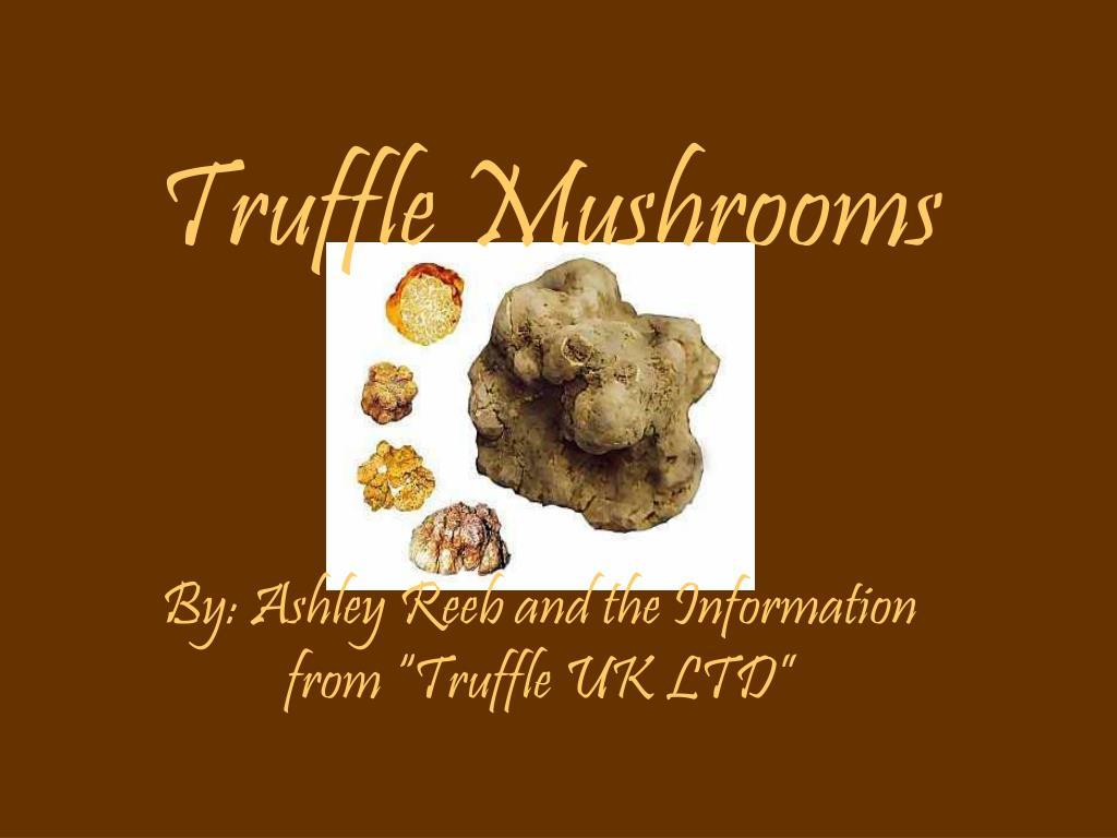 truffle mushrooms l.