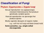 classification of fungi36