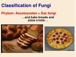 classification of fungi49