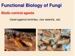 functional biology of fungi71