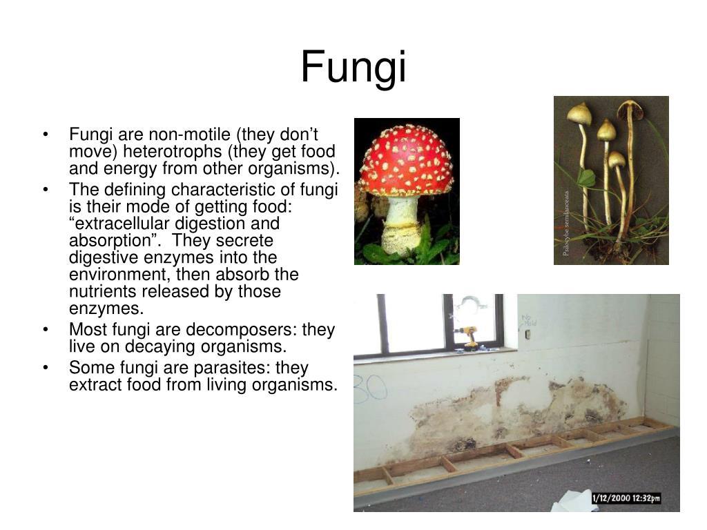 fungi l.