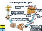 club fungus life cycle17