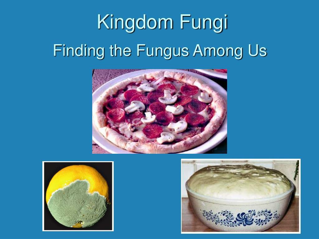 kingdom fungi l.
