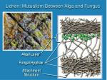 lichen mutualism between alga and fungus