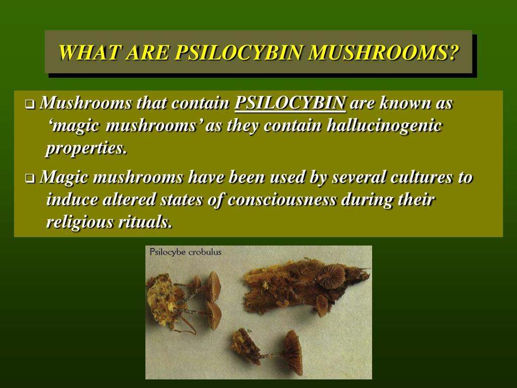 Mushrooms that contain