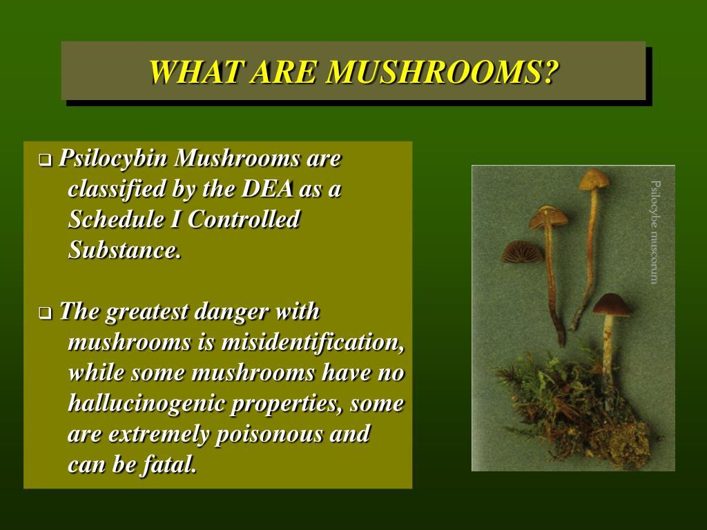 WHAT ARE MUSHROOMS?
