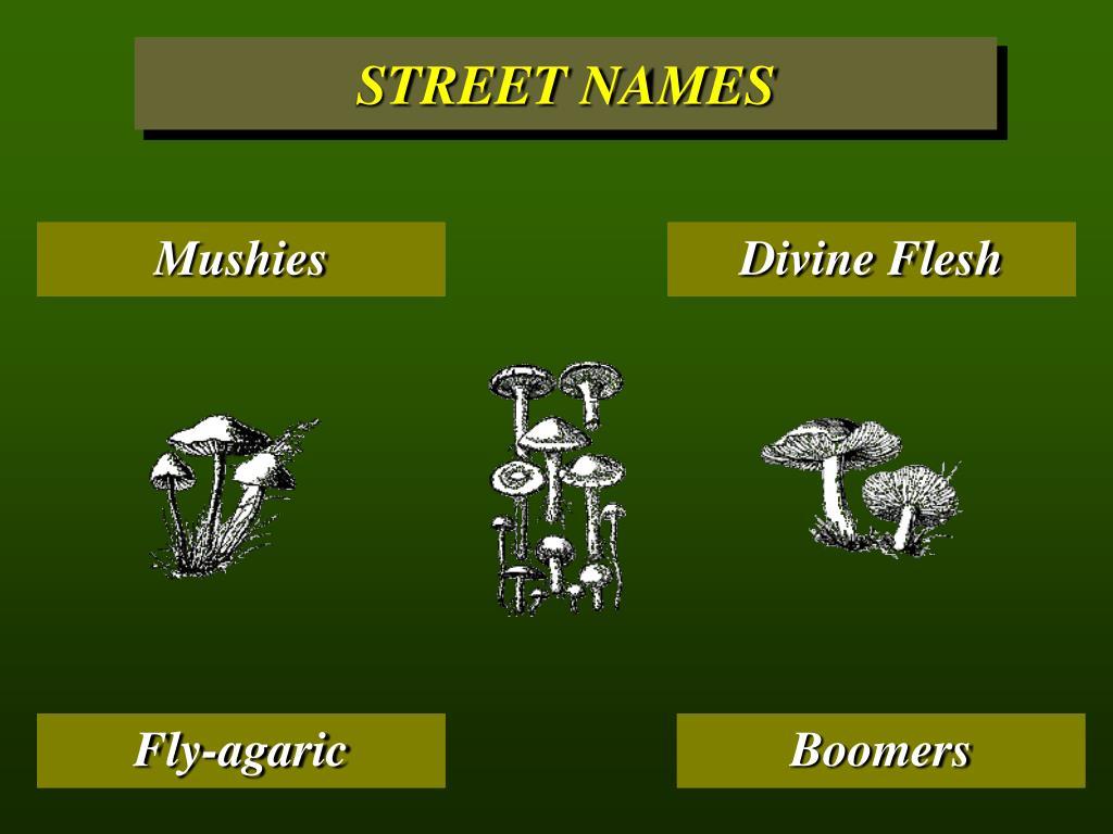 STREET NAMES