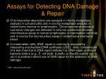 assays for detecting dna damage repair