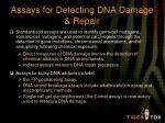 assays for detecting dna damage repair1