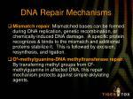 dna repair mechanisms2