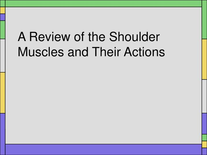 a review of the shoulder muscles and their actions n.