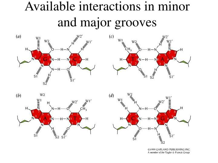 Available interactions in minor and major grooves