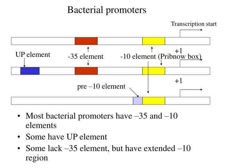 Bacterial promoters
