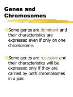 genes and chromosomes1